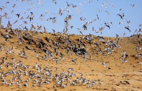 היסעוראים – עופות הים הפתוח
