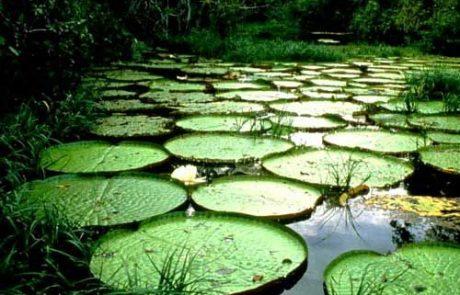 יער הגשם הטרופי של האמזונס- חלק א