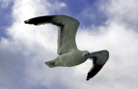 עופות בולטים באמריקה הדרומית