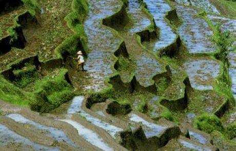 אינדונזיה – ארץ האיים הגדולה בעולם -אחדות בתוך פירוד