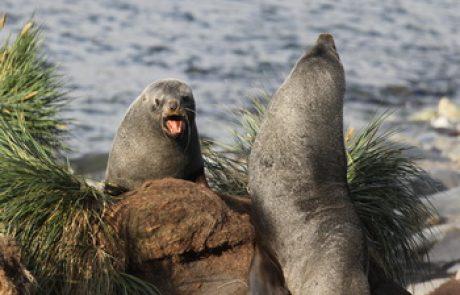 כלבי ים ואריות ים