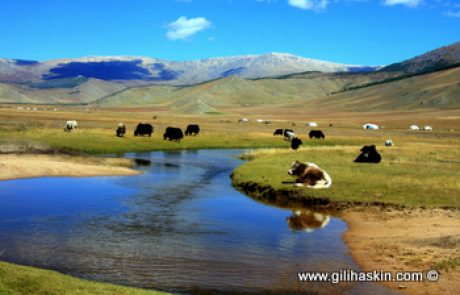 התרבות המונגולית