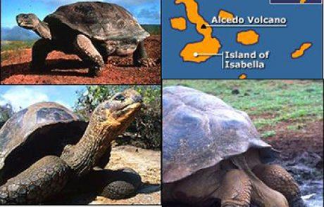 צבי הענק של איי הגלפגוס