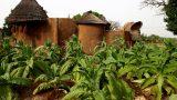 Benin-web_48
