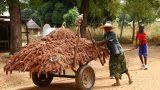 Benin-web_68