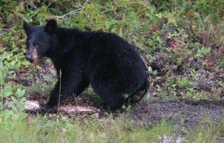 עולם החי של קנדה – יונקים