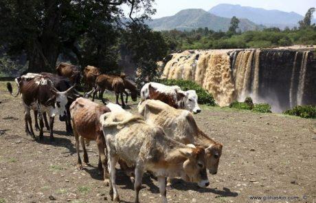 טיול לאתיופיה ספט'-אוק' 2015