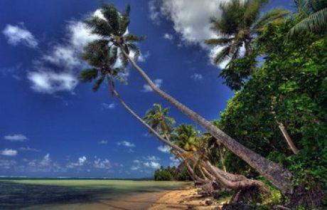 צלילות באי יאפ שבמיקרונזיה