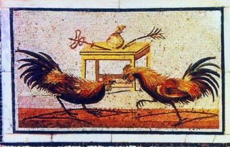 קרב תרנגולים בבאלי
