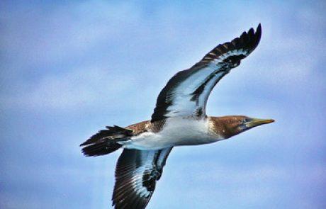 הרצאה על איי הגלפגוס-נוף וטבע