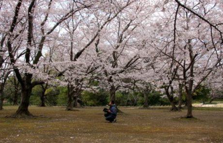 יפן – בין אסון לפריחה
