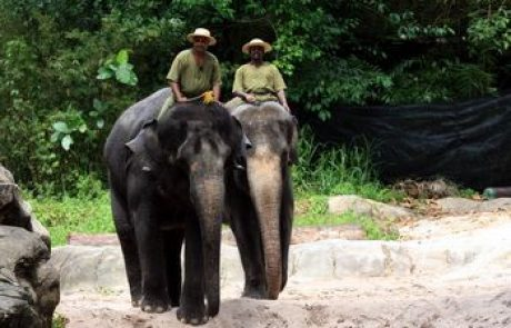 הפיל – מבנה גוף, תכונות ואורח חייו בטבע