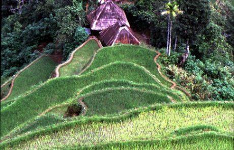 הפסיפס האתני של שבטי ההרים בפיליפינים.