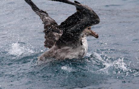 מבוא לעולם החי של אנטארקטיקה