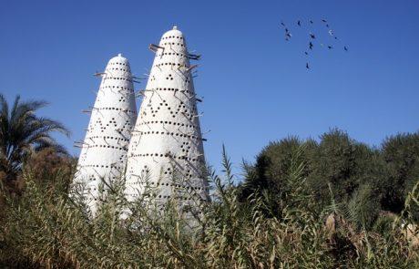 נאת המדבר סיווה, שבמדבר המערבי של מצרים