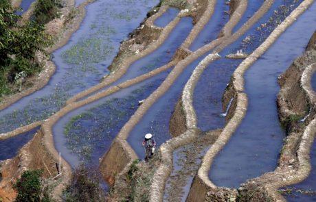 תרבות הטראסות (מדרגות) החקלאיות