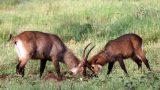 Tanzania-14-b_136-min