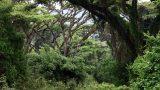 Tanzania-14-b_26-min