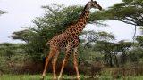 Tanzania-14-b_92-min