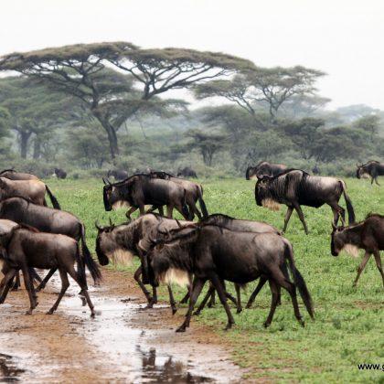 טנזניה- מזרח אפריקה