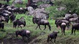 Tanzania-14-b_95-min