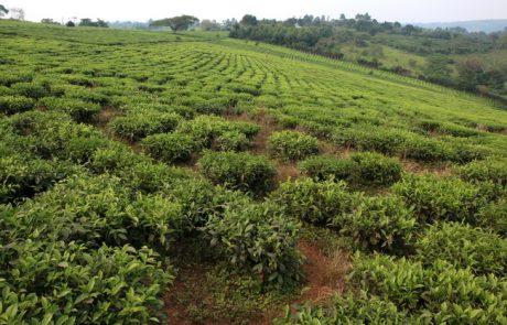 מבוא לטיול ברואנדה