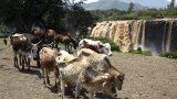 ethiopia-4