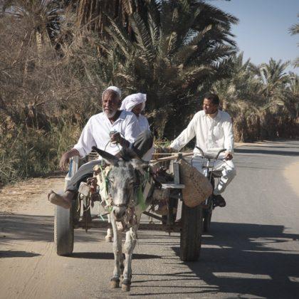אפריקה – סיווה-מצרים
