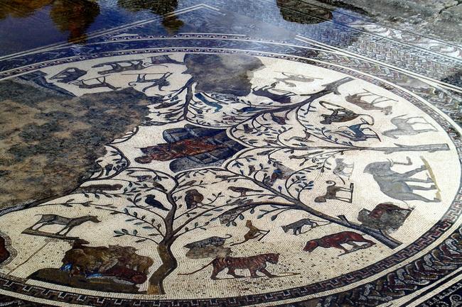 רצפת פסיפס של וילה רומאית במרוקו. צילום: גילי חסקין
