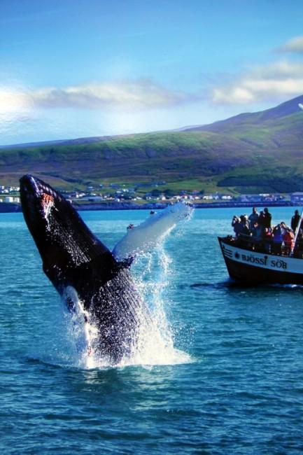 צפיה בלוויתנים